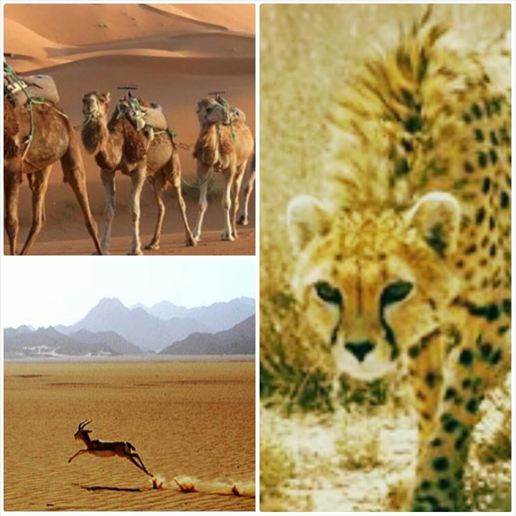 iran safari and desert tour
